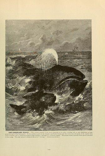 Bowhead Whale - Westmark Hotels Alaska & Yukon Territory
