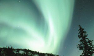 Dramatic green and white Northern Lights Aurora Borealis in the Fairbanks Alaska night sky