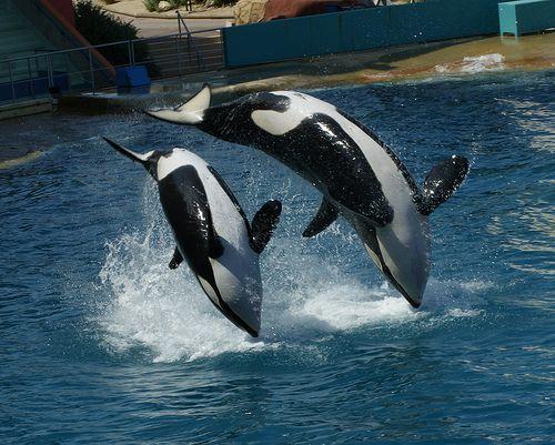 Orca Whale - Westmark Hotels Alaska & Yukon Territory