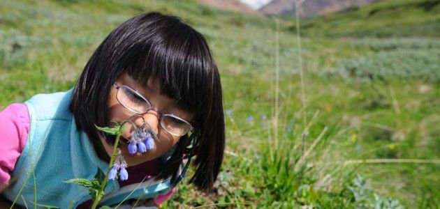 little-girl-with-bluebells-at-denali-national-park