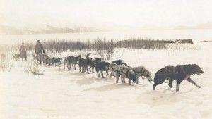 Alaska Dog sled and team from 1920's Westmark Hotels Alaska & the Yukon